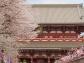 Senso Ji Temple, Tokyo