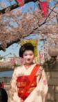 Woman dressed like a Maiko, Tokyo