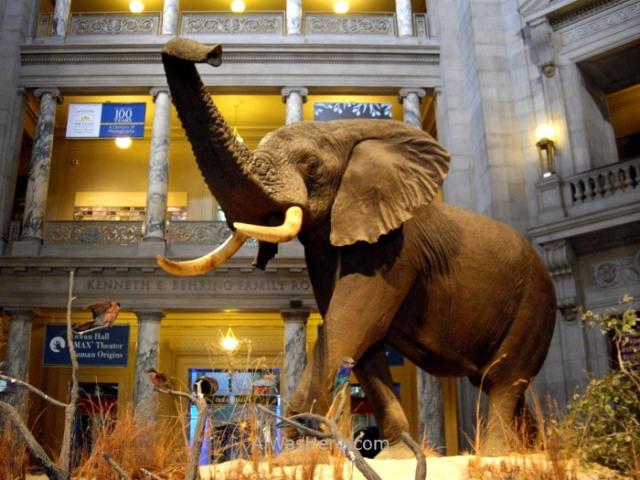 Museo historia natural Washington DC history museum