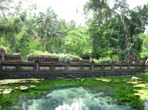 Thermal pool near the jungle