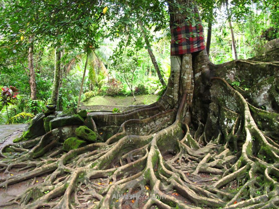 Tree in Goa Gajah