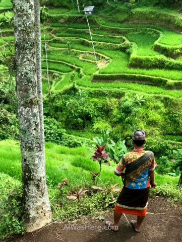 Local guide looking at Tegallalang rice paddies, Ubud, Bali