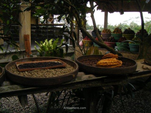 Fabricación Kopi Luwak
