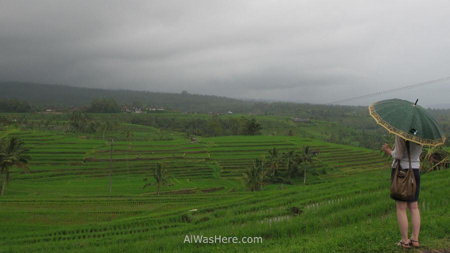 A tourist contemplates Jatiluwih rice fields on a rainy day