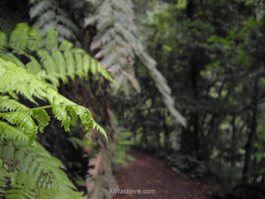 bosque-humedo-los-tilos