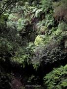 Los Tilos, La Palma Island