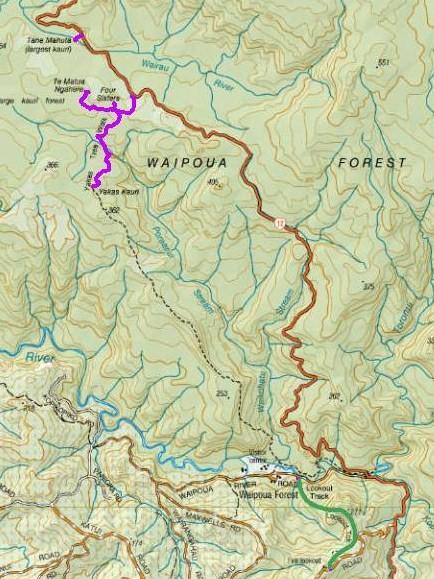 mapa-bosque-waipoua