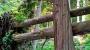 Perpendicular fallen trees, Juan de Fuca Trail, Vancouver Island