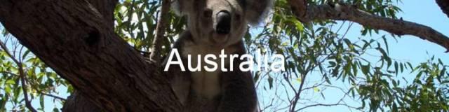 Australia. koala bear. Magnetic Island