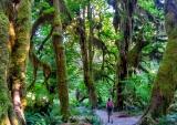 Hoh Rainforest, Olympic National Park