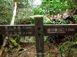 Yodogawa Trail, Yakushima