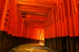 Tunnel made of multiple toriis in Fushimi Inari Inari Taisha, Kyoto