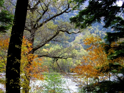 Autumnal forest in Kamikochi, Japanese Alps
