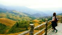 Pili in A Thousand Layers to Heaven viewpoint, Dazhai, Longji, Guilin, China