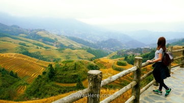 Pili in A Thousand Layers to Heaven viewpoint, Dazhai, Longji, Guilin, China