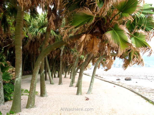 AOSHIMA 2. Isla Island palmeras beach playa sand arena palms Japan Japon Kyushu Miyazaki