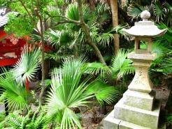 Dense vegetation next to de shrine