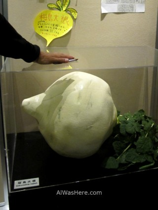 Model of a giant radish in Visitors Center