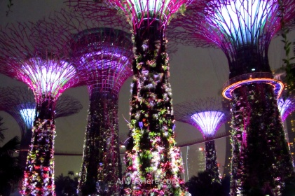 Massive artificial trees in the Gardens by the Bay in Singapore illuminated at night