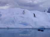 Antartida Puerto Neko foca Leopardo y pinguinos Gentu, Antarctica Neko Harbour Leopard Seal and Gentoo penguins