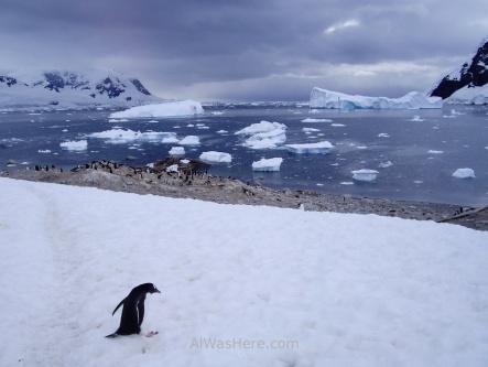 Neko Harbour, Antarctica