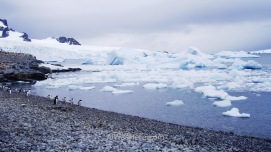 Antártida Cuverville Island Antarctica (3)