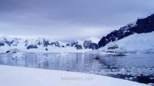 Antártida Cuverville Island Antarctica (5)